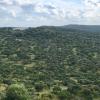 Ayudas forestales 2019